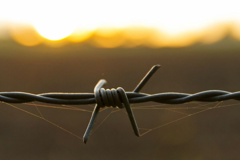 Close-up of spider web on barbed wire during sunset