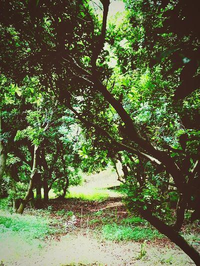 我想在树林里寻找你的身影 First Eyeem Photo