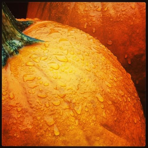 Morning rain over the pretty pumpkins today.