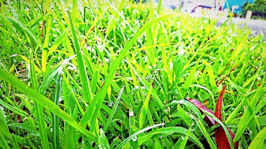 Morning greeting! Morning Dew Good Morning EyeEm Nature Lover EyeEm Best Shots Mobile Photography