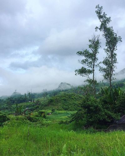 Cloud - Sky Sky Nature Landscape Beauty In Nature Scenics Growth Tree Mountain Field Outdoors Day Grass Green Color Plant Tourism Scenery Travel Destinations Adventure Fog Mist Foggy Leaf Osmeña Peak Cebu City, Philippines