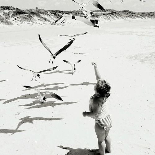 Beach Sand One Person People Vacations One Woman Only Outdoors Bird Human Body Part Only Women Adults Only Animal Themes Nature Sand Dune Day One Young Woman Only Young Adult Adult Human Hand Port Aransas Aransas Pass Port Aransas Texas Seaside Sea Gulls Toddlerstyle