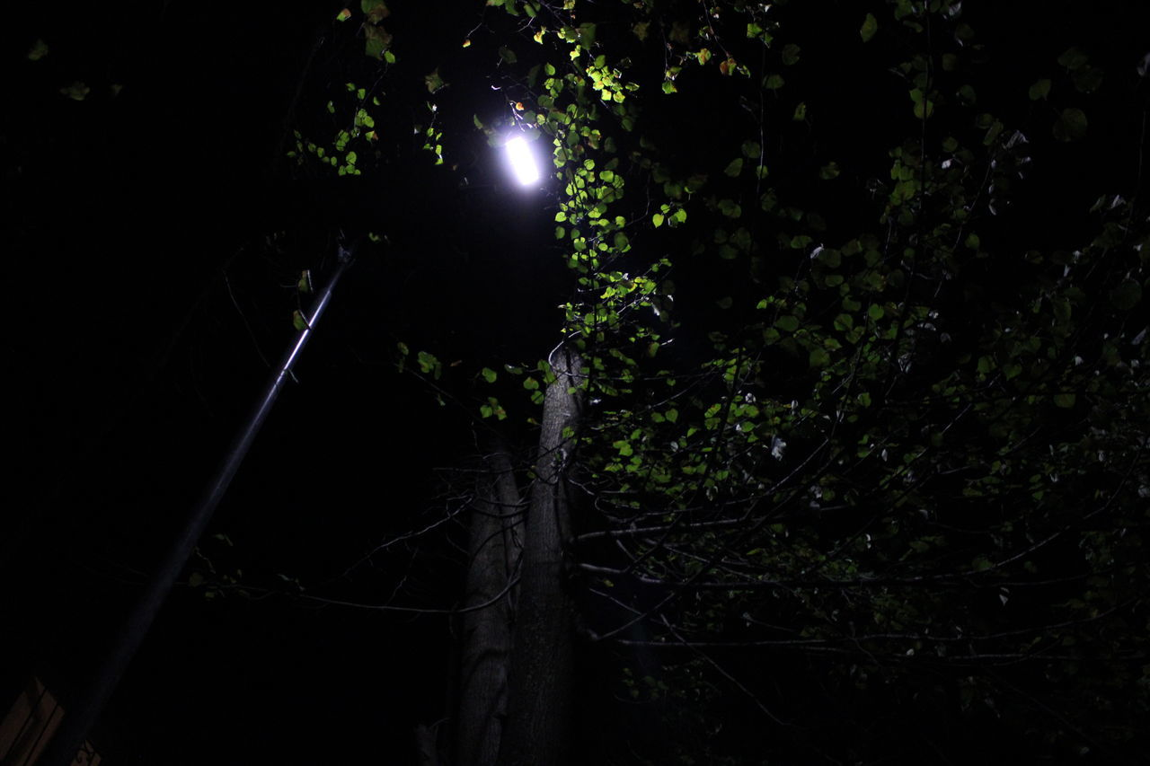 LOW ANGLE VIEW OF ILLUMINATED LIGHTS ON TREES IN FOREST