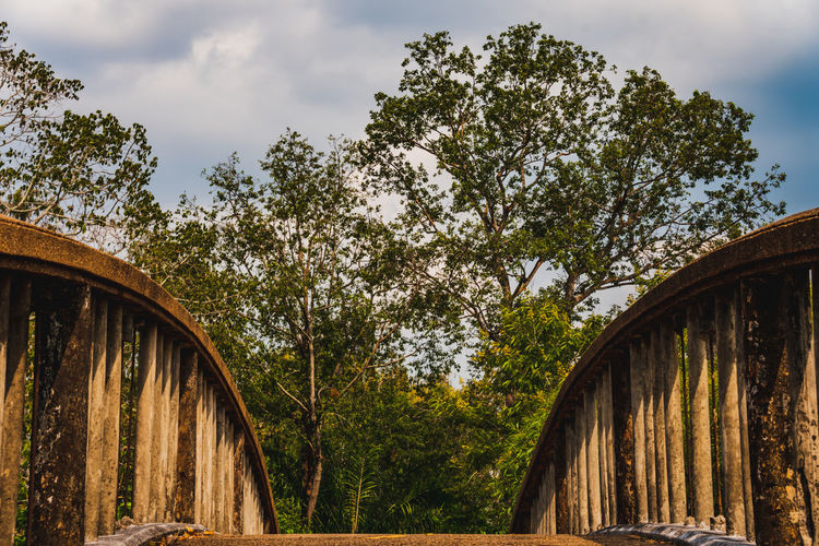 Low angle view of bridge amidst trees in forest against sky