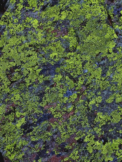 Lichen On A Rock Lichens Full Frame Green Color Backgrounds Pattern No People Day Close-up