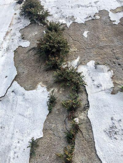 High angle view of snow on rock