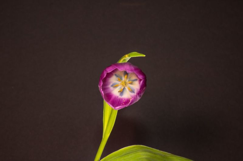 One bloom