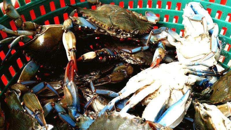 Fresh blue crabs Blue Crab Louisiana Swamp Louisiana