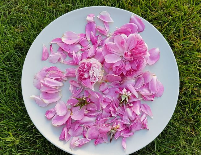 Flowerful Decoration Plate Pink Color Flower High Angle View Directly Above No People Petal Freshness Nature Close-up Flower Head Outdoors Outdoors Photograpghy  Garden Photografie Fragility Faded Roses