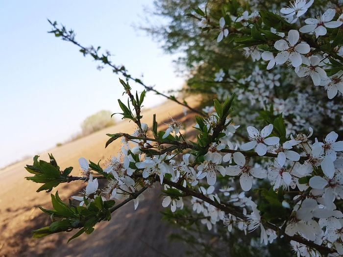 Landscape Nature Beauty In Nature Outdoors Close-up Flowers, Nature And Beauty Flowers_collection Nature Photography Nature_perfection Nature_collection Branch No People Fragility Springtime Petal Blossom Growth Freshness Beauty In Nature Flower Nature Day