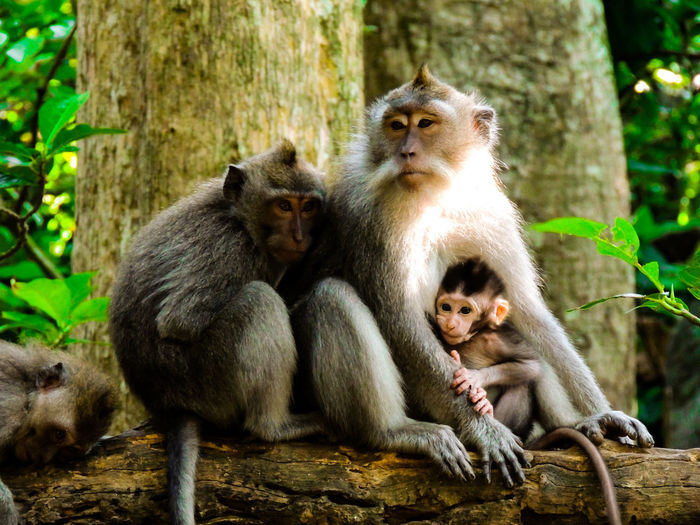 Portrait of monkey sitting on tree trunk in forest