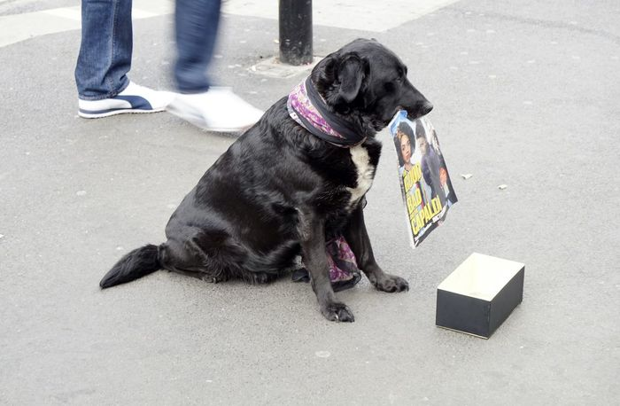 1941 Black Labrador Canine City Day Daytime Daytime Photography Dog Dog Collection Dogs Life Labrador London London Streets Low Angle View Magazine Pavement Person Sales Sales Dog Sat Sat Down Selling Selling On The Street Street Corner Animal Collection EyeEm Diversity The Photojournalist - 2017 EyeEm Awards BYOPaper!