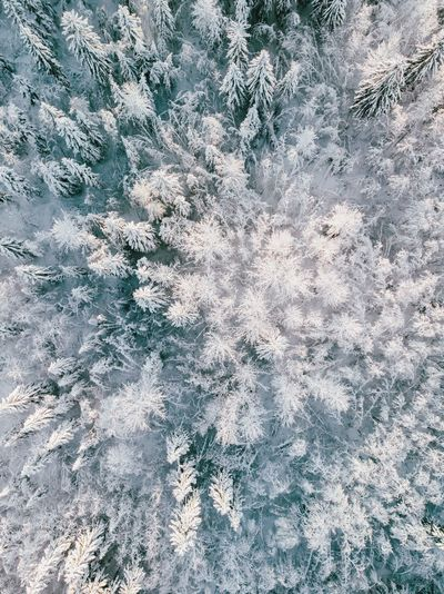 Forest Winter Trip christmas tree Backgrounds Full Frame Pattern Textured  No People Close-up Rough Day Abstract Outdoors Nature Old Weathered High Angle View