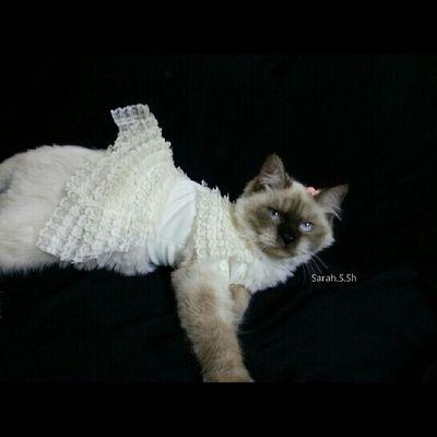 فستان العيد ♡♡♡ نوسي