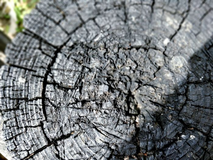 Tree rings burned Fire Burn Burned Tree Rings Tree Ring Tree Ring Tree Concentric Tree Stump Backgrounds Textured  Destruction Wood Grain Wood - Material Cracked Plant Bark Woodpecker Timber Woodpile Bark Environmental Damage Firewood