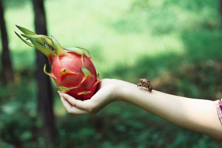 Hand Human Hand Human Body Part Focus On Foreground One Person Holding One Animal Close-up Outdoors Child Plant Day Childhood Care Animal Wildlife Nature Vertebrate Reptile EyeEmNewHere