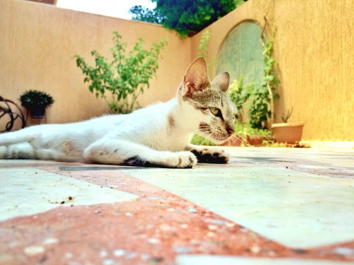 Deceptively Simple Eye4photography  Animals The Week Of Eyeem Cats Enjoying Life Ebeshti Check This Out Relaxing