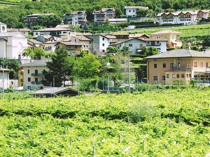 Italy🇮🇹 Winefields Building Exterior Architecture Built Structure House Residential Building Roof City No People Outdoors Detached House Cityscape Cultures Day Village View Village Life Village Photography Summer ☀