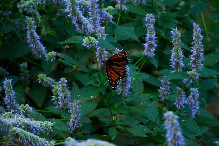 Mariposa otoñal