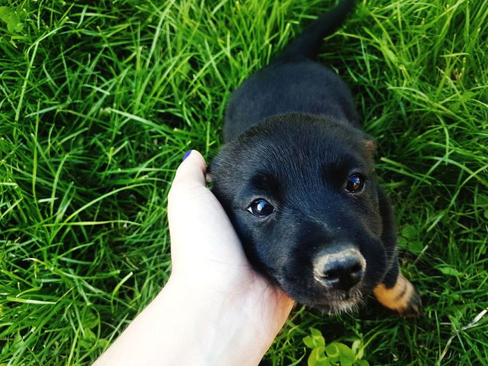 Human Hand Pets Dog Personal Perspective Close-up Grass