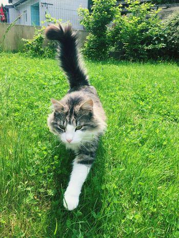 Neighbors Cat coming to me 😺, Nachbarskatze , Cat♡ Cats Cat Lovers Cats 🐱 Cats Lovers  Katzen 💜 Katzen Katzenliebe Katze Tiere♡ Tiere Tiere/Animals Animals🐾 Chat Hobbyphotography Hobbyfotograf Iphonegraphy