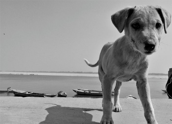 Close-up of dog sitting on beach against sky