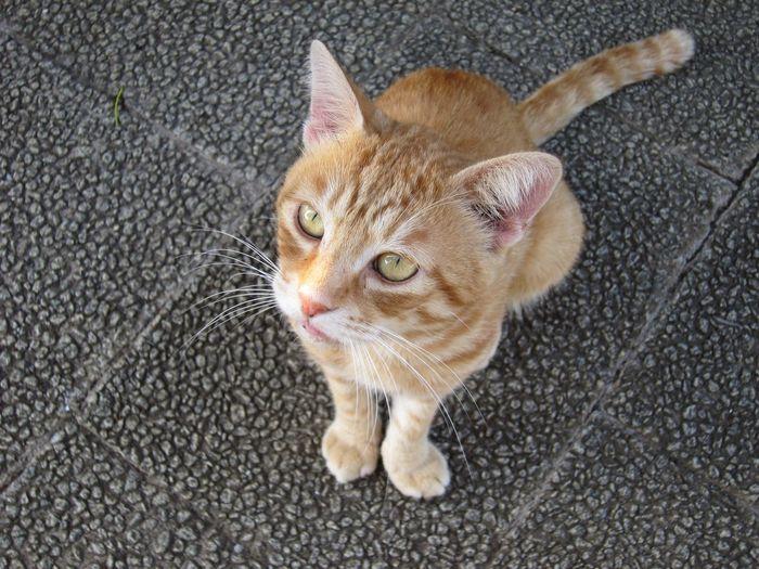 Domestic cat on a sidewalk