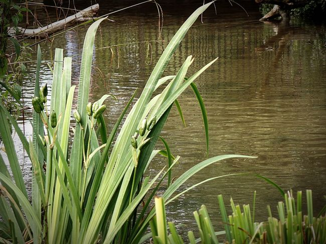 Photography Water Lake Plant Growth Leaf No People Freshness Nature Beauty In Nature Reflection