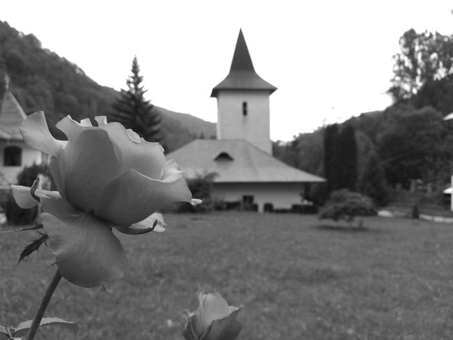 I played with focus a little bit :) In the background we can see a very old church , built in the XIII century . It is one of the oldest monasteries in Transilvania. For more infos go to this link https://ro.wikipedia.org/wiki/Mănăstirea_Râmeț Close Up Photography EyeEm Best Shots EyeEm Gallery EyeEm Nature Lover Monastery Monochrome Ramet Monastery Romania Rose Collection Rose Petals Focus Objects Neighborhood Map Black And White Friday