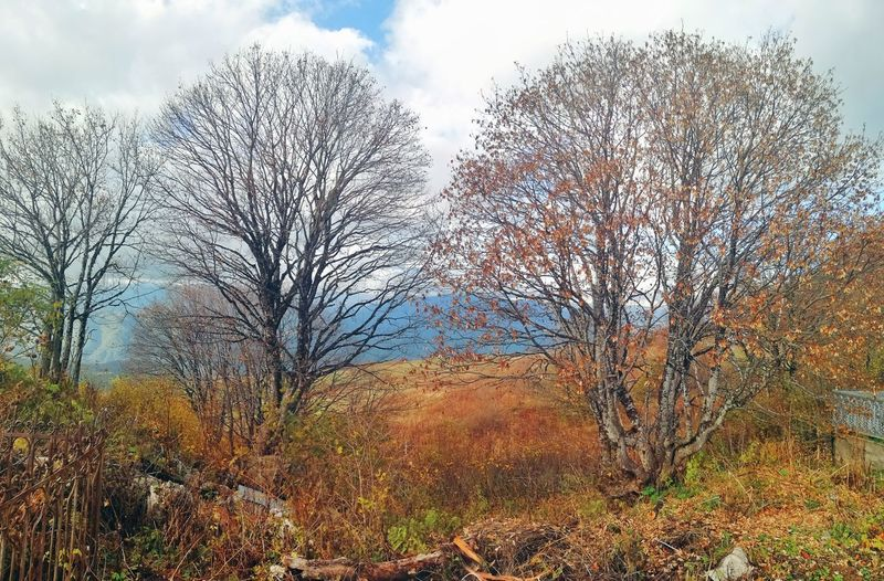 Bare trees on field against sky during autumn