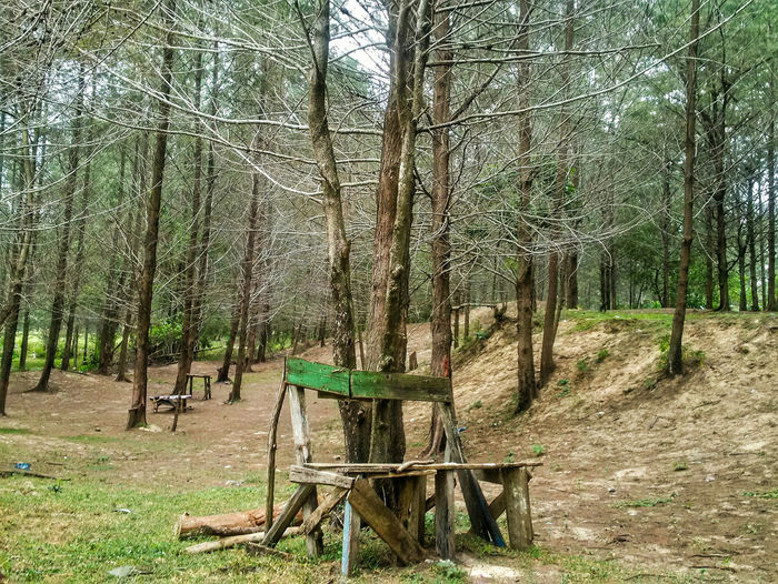 The Great Outdoors With Adobe Forest Park Bench Pine Pine Trees Nature Nature_collection Nature Photography EyeEm Best Shots The Great Outdoors - 2016 EyeEm AwardsEye4photography  Taking Photos Hanging Out Outdoors Green EyeEm Nature Lover Eyeem Aceh INDONESIA Fine Art Photography