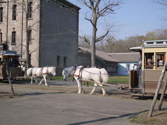 馬車 Horse-drawn Carriage
