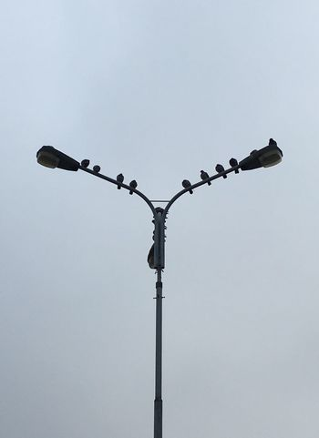 Urban Streetphotography Birds Pigeons Lamp Streetlights Minimalism Cities Street Simplicity Outside Light Light And Shadow Zipline Town Czech Republic Karvina Parking High Angle View Animals Blackandwhite