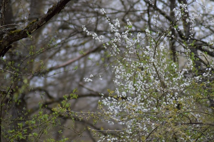 April2018 April 12.04.2018 Plant Tree Growth Nature Day Focus On Foreground Beauty In Nature Flower Flowering Plant Outdoors