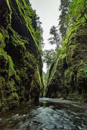 Who photographed Oneonta Gorge for the first time? | Who would've known that the gorge was named after a town called Oneonta in New York, where Carleton Eugene Watkins came from. He photographed it for the first time, back in 1849 when he traveled to California during the Gold Rush. The incredible part of the story is that he knew nothing about photography before moving 3,000 miles across the country,, and yet, thanks to his great photos of the Yosemite Valley, US Congress made the decision to preserve Yosemite as a national park. Sadly he lost his sight in the 1890s. His last commission was from Phoebe Hearst, mother of William Randolph Hearst, who built the nation's largest newspaper chain, which then became the subject of the movie Citizen Kane, which Orson Wells co-wrote and won the Academy Awards for Best Screenplay with Herman Jacob Mankiewicz, who worked on the Wizard of Oz but that never got the credit for. Oneonta Gorge, Columbia River Gorge, Oregon Adventure Beauty In Nature Columbia River Ferns Flowing Water Landscape Photograpy Lichens Mosses Narrow Nature No People Non-urban Scene Oneonta Creek Oneonta Gorge Oregon Outdoors Overcast Pacific Northwest  Solitude Stream Tranquility Tree Water Waterfalls Watkins
