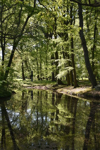 Beauty In Nature Forest Green Green Color Growth Idyllic Lush Foliage Nature No People Non-urban Scene Outdoors Pond In Forrest Reflection Scenics Standing Water Sunnyday Tranquility Tree Water Nature's Diversities