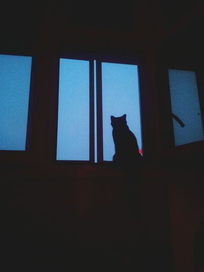 Light And Shadow Cat♡