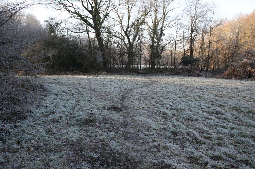 Beauty In Nature Day Frosty Field Frosty Morning Growth Landscape Nature No People Outdoors Scenics Sky Sun Surrey Countryside Tranquility Tree Trees Walk