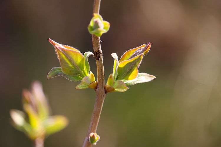 Close-up of flower buds
