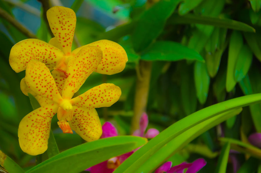Nature Beauty In Nature Focus On Foreground Close-up Flower Head No People Outdoors Leaf Orchid Flower Yellow Orchids EyeEm Best Shots EyeEm Nature Lover EyeEm Gallery