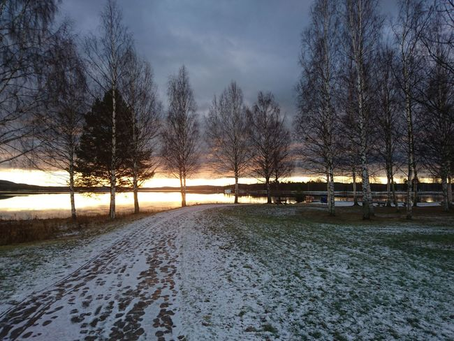 Tree Nature Cold Temperature Sky Tranquility Snow Beauty In Nature No People Tranquil Scene Winter Sunset Outdoors Scenics Water Day Middle Of Sweden Hälsingland November Norrland Varpen Sverige Bollnäs Lake Varpen Sunrise
