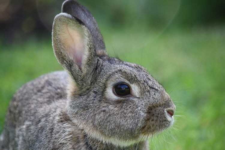 Close-up of rabbit on field