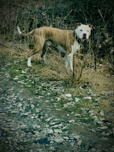 Arinko Aris Vintage Dog Čadca, Slovakia Prečo Nie