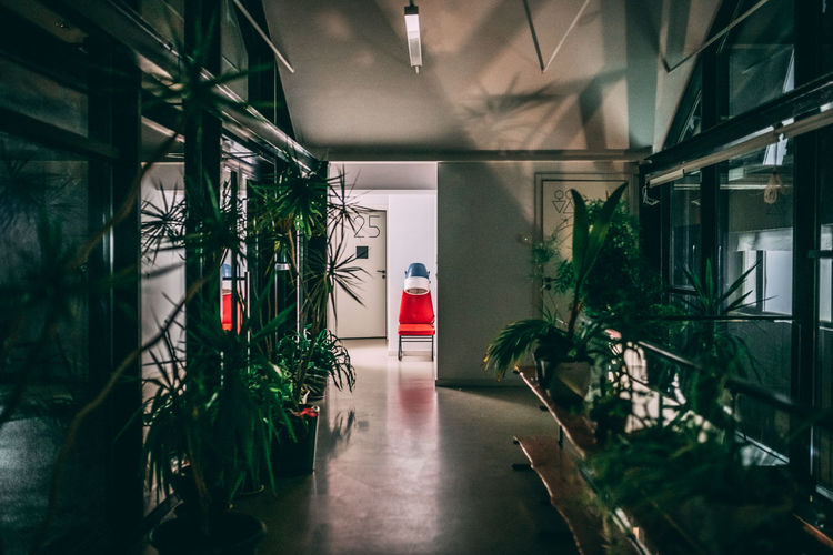 Potted plants on empty corridor of building