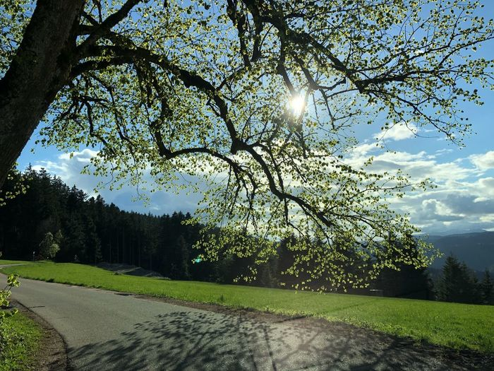 Abendstimmung Tree Plant Sky Growth Nature No People Stay Out Sunlight Outdoors