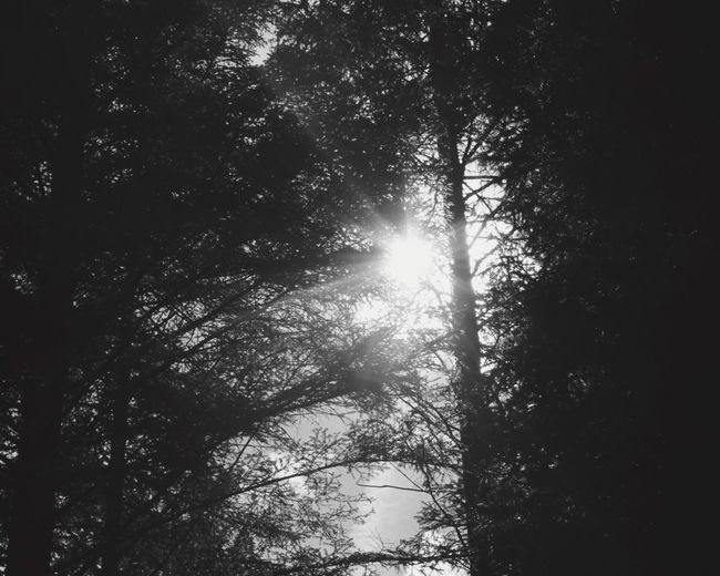 Tree Tree Nature Low Angle View Beauty In Nature Growth Tranquility Sunlight No People Scenics Sun Forest Outdoors Sky Day Sunbeam One Person Sole Alberi Summer Foto Lifestyles Sun Tumblr Fotografia -CM