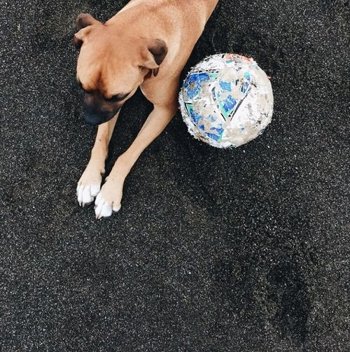 Boxer (dog) with his football on a black lava beach, Playa Venao, Panama. Boxer Dogs Football From Above  Panamá Square Animal Animal Themes Day Dog Domestic Animals High Angle View IPhoneography Lava Low Section Lying Down Mammal Mobile Photography No People One Animal One Person Outdoors People Pets Travel Destinations