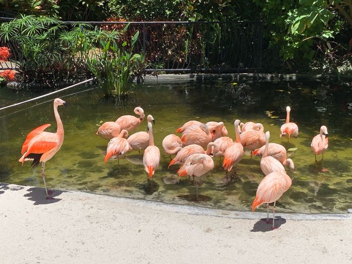 Flamboyance Of Flamingos Bird Animal Vertebrate Animal Themes Animals In The Wild Flamingo Animal Wildlife Group Of Animals Water Large Group Of Animals Plant Reflection Tree Nature Outdoors No People Pink Color Beauty In Nature Day Lake