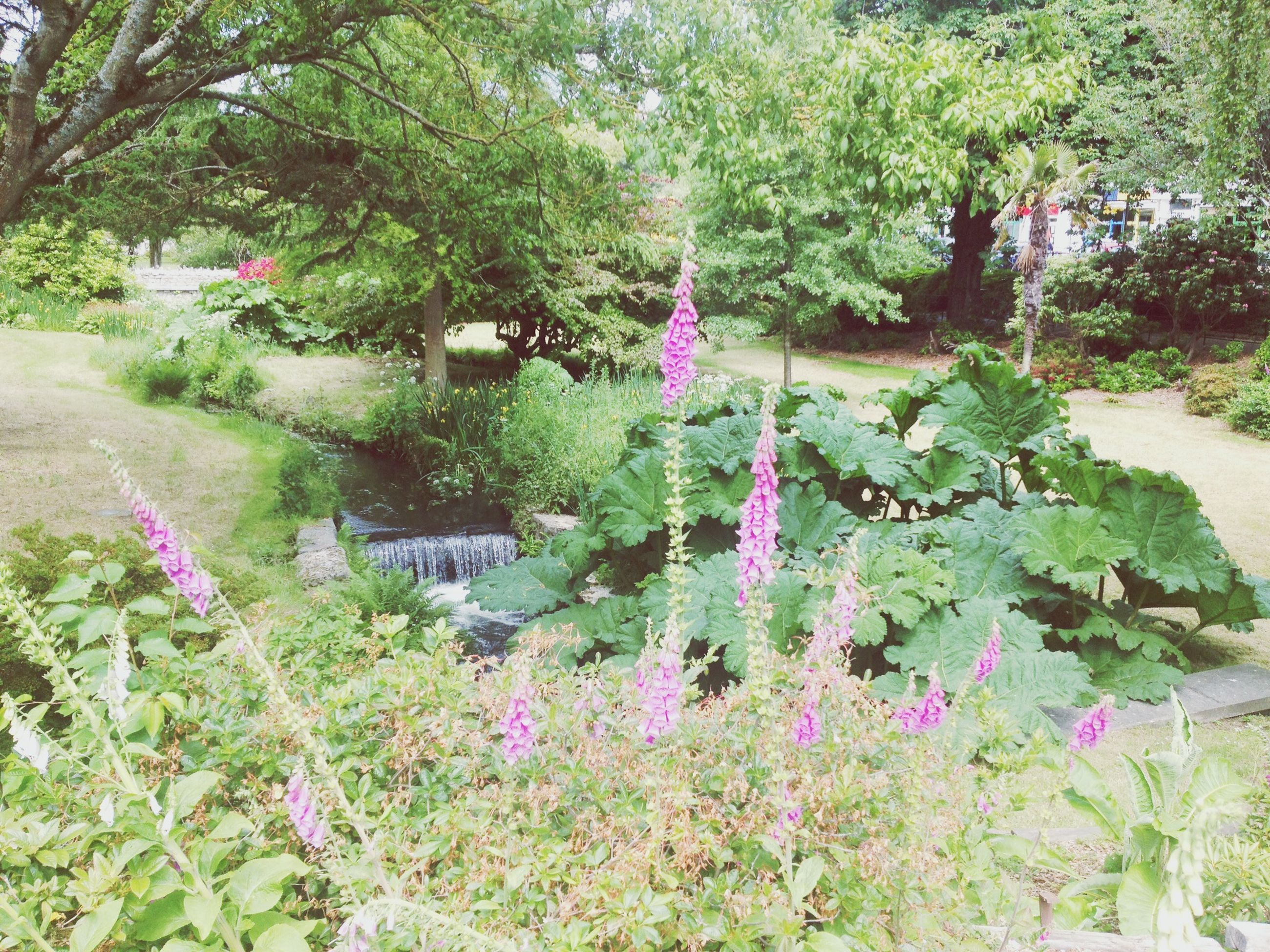 flower, growth, tree, plant, beauty in nature, freshness, nature, green color, purple, park - man made space, pink color, fragility, tranquility, blooming, leaf, growing, day, in bloom, water, green