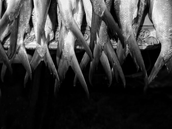 Silver Fins | Food Close-up Indoors  No People Fish Seafood Market Seafood Wet Market Milkfish Bangus Monserate Images Fresh Black And White